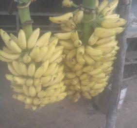Banana and Vegetable...