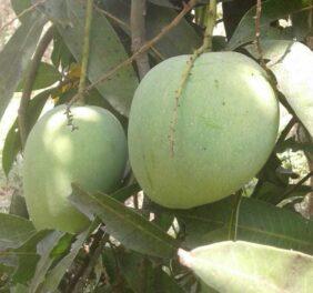 Chandana fruits&...